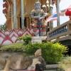 Actually , Samui Thailand