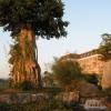 hotel-tree